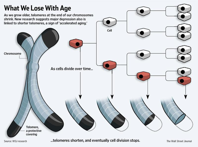 A long health telomere is a sign you will live a long and healthy life.