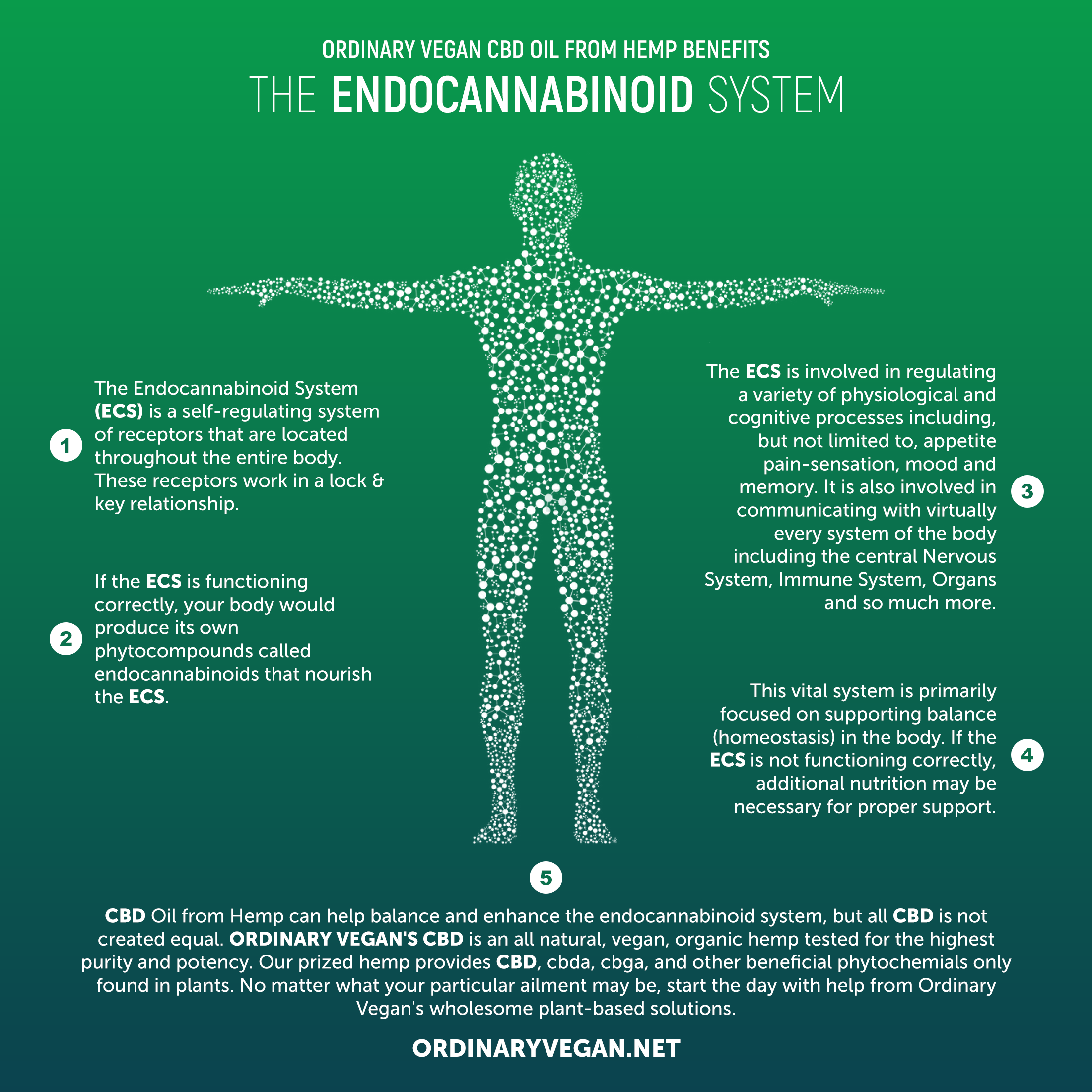 Pure CBD Oil To Benefit The Endocannabiniod System